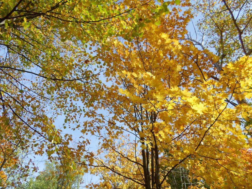 Майков осенние листья по ветру кружат картинки